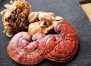 medicinal-mushrooms-benefits-beta-glucans